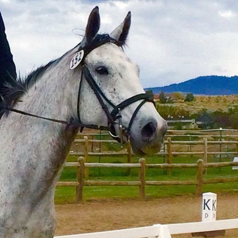 An Event Barn Goes Dressage at OUAH